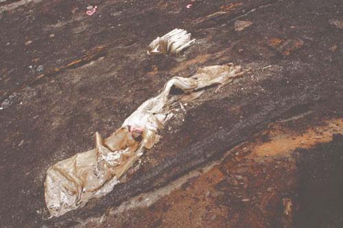 Colorado Firecamp Cramer Fire Factual Report Appendix D